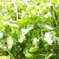 *Snowy Flowers*