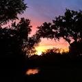 写真: お散歩中の夕焼け♪