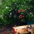 写真: 洞爺の小さい秋♪