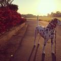 morning walk...