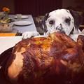 写真: Happy Thanksgiving!