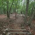 Photos: よく整備された木の階段