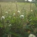 Photos: Fields of Clover.