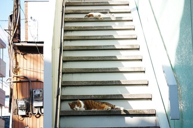 階段警備隊1号、2号
