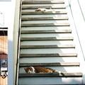Photos: 階段警備隊1号、2号