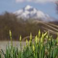写真: ゆっくりと 春。