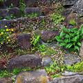 写真: 廃墟への階段