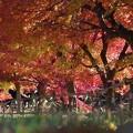 写真: 紅葉の下で
