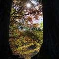 写真: 日光の森