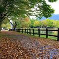 写真: Falling leaves