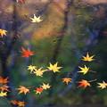 写真: Autumn Leaves