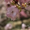 写真: 2017年5月5日 楊貴妃