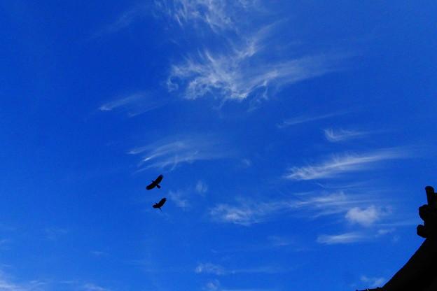 写真: 青い空