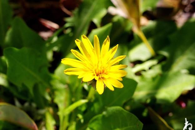 春の黄色代表