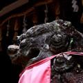 写真: 春日神社の狛犬