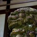 写真: 神出神社の狛犬