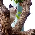 写真: 木登りにゃんこ