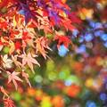 秋色玉ちゃん