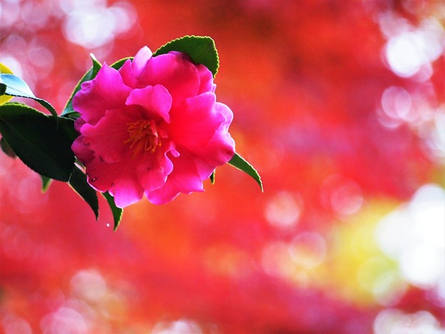 ピンクの世界へ