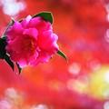 写真: ピンクの世界へ
