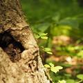 Photos: 木を這う若芽