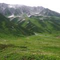 写真: 花々と立山