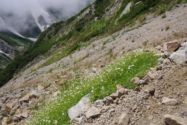 立山の可憐な花々