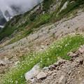 写真: 立山の可憐な花々