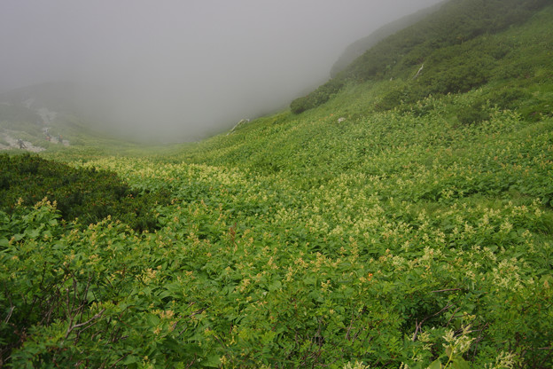 写真: 雷鳥坂の谷間の花々