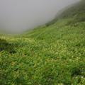 雷鳥坂の谷間の花々