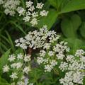 写真: 線香花火の様な花