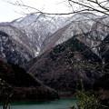 ダム湖と冬桜