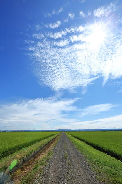 写真: 八郎潟 田園ストレート