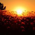 Photos: 『秋の大海原。。。』