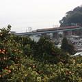 Photos: 113系2000番台マリ117編成 団臨「懐かしの113系で行く東海道本線の旅」