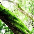 青海苔を振りかけた木