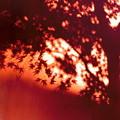写真: 秋の影絵