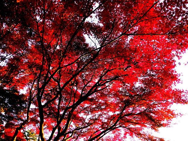 紅葉真っ只中