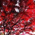 写真: 紅葉真っ只中