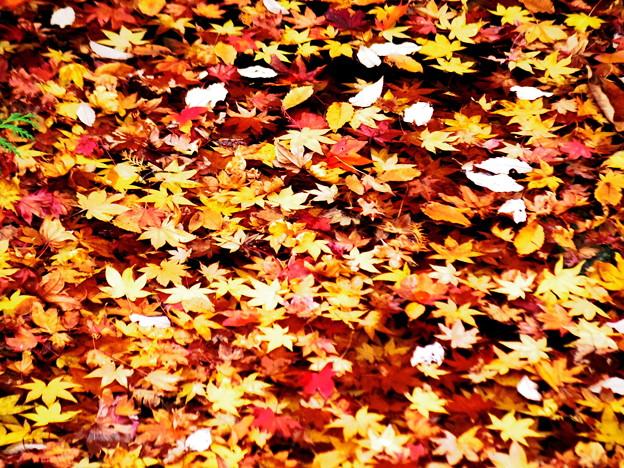 落ち葉も綺麗