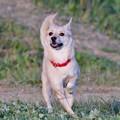 Photos: 散歩犬:ミックス.3