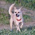 Photos: 散歩犬:ミックス.2