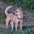 Photos: 散歩犬:ミックス.1
