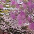 春の花色1-1