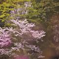 春の花色1-2