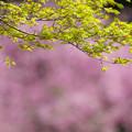 春の花色2-2
