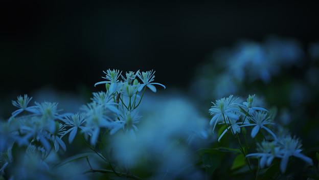 初秋 宵の彩1