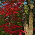 写真: 紅葉探索9-3