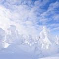 写真: 蔵王の樹氷