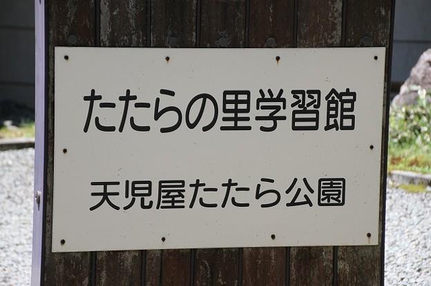 天児屋たたら公園のクリンソウ(1)